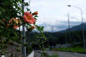 道端の花2