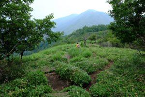 駒ヶ岳から先の尾根歩き