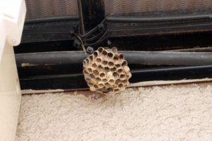 蜂の巣 最後