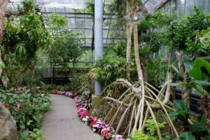 熱帯植物1