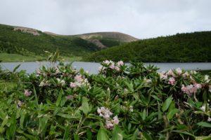 鎌池と石楠花