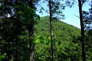 笠山への上り道から見た笠山